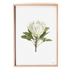 King Protea White