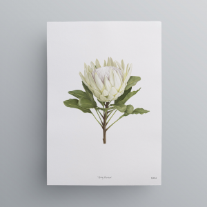 Protea-print