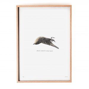 Birdie framed