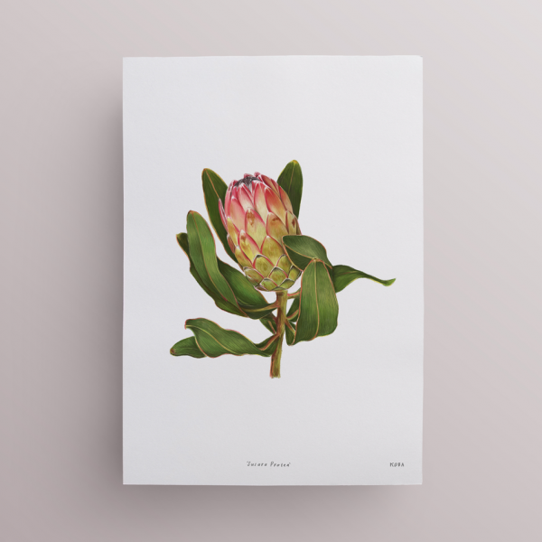 Protea-print-II